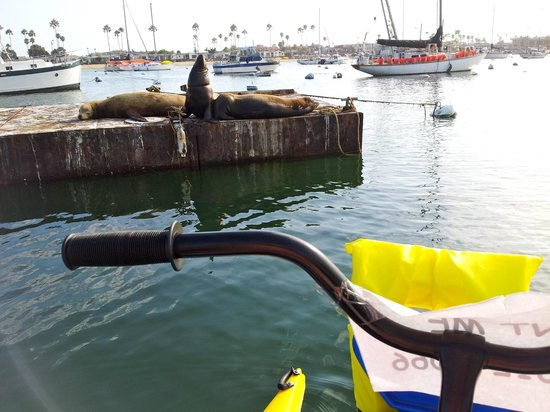 Pacific Coast Hydrobikes Hydrobiking Past Sea Lions