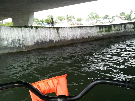 Pacific Coast Hydrobikes: Visiting with a pelican