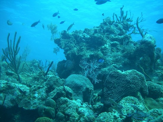 Happy Fish Divers:                   Corals and fishes