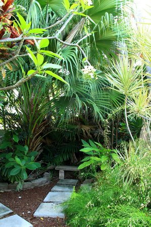 Palmetto Guesthouse:                                     giardino