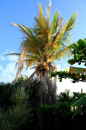 Palmetto Guesthouse:                                     in giardino