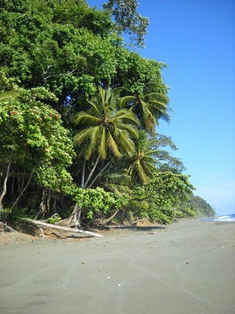 El Remanso Lodge :                   hike down to the glorious beach