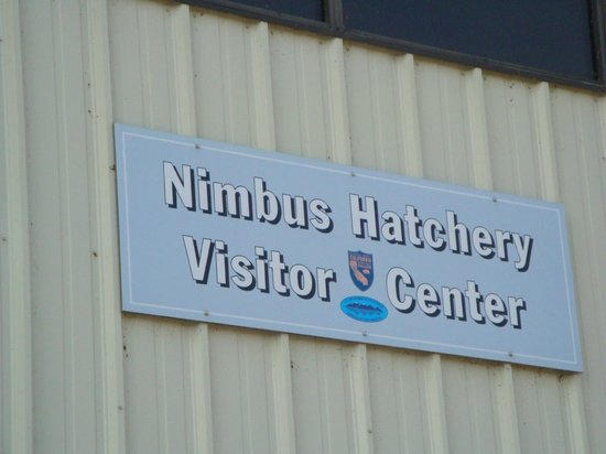 Nimbus Dam and Fish Hatchery :                   Visitor Center