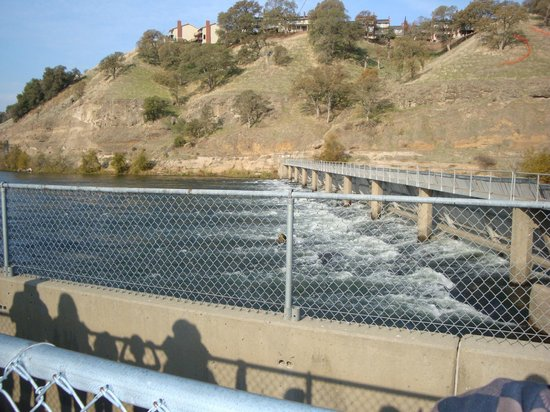 nimbus dam and fish hatchery gold river ca top tips