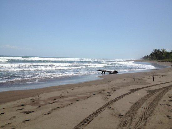 Cabinas El Icaco Tortuguero:                   beach