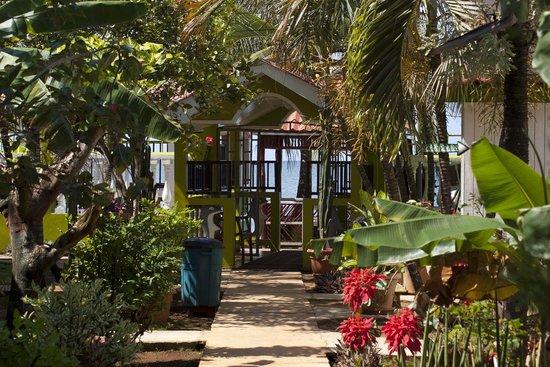 Hotel Los Delfines:                   Garden