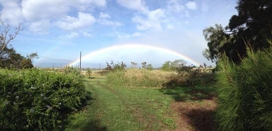 Puakea Ranch:                                     somewhere over the rainbow