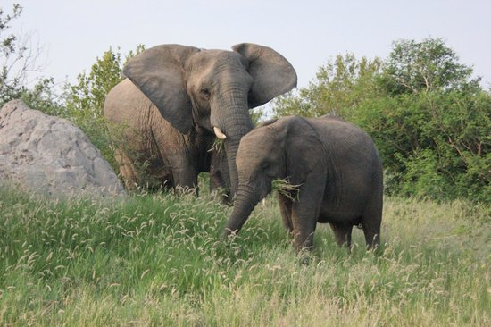 Ezulwini Game Lodges:                   Elephant herd had two or three babies