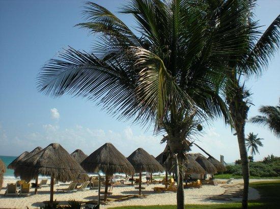 Iberostar Grand Hotel Paraiso: Beach