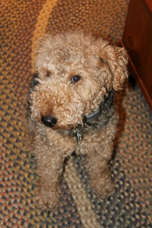 Colonial Crossroads B&B: Flash - the most adorable dog
