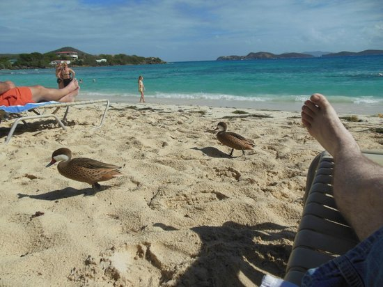 Sand, waves, and ducks at Sapphire Beach