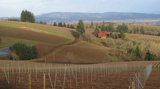 Wine Country Farm:                   Looking east to the neighboring vineyard