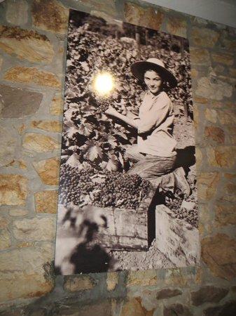 Beaulieu Vineyard : My younger days!