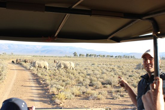 Inverdoorn Game Reserve Safaris:                   white Rhinos