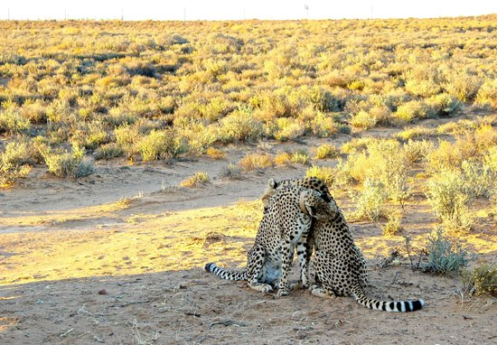 Inverdoorn Game Reserve Safaris:                   Hallmark moment