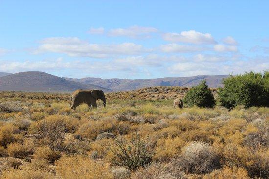 Inverdoorn Game Reserve Safaris 사진