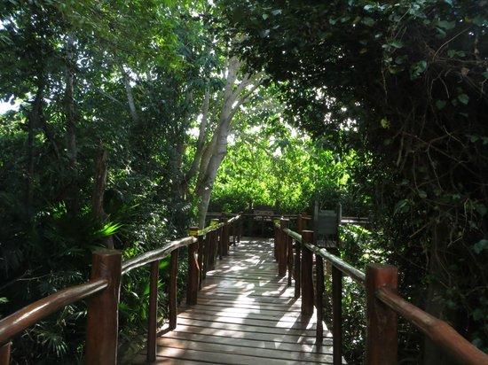 Grand Palladium Colonial Resort & Spa:                   View of one of the walkways