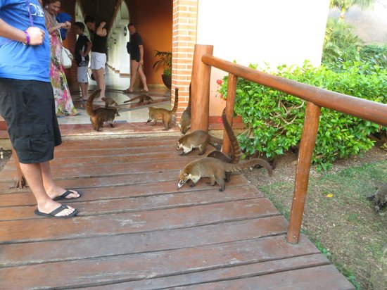 Grand Palladium Colonial Resort & Spa:                   Wildlife by the buffet area