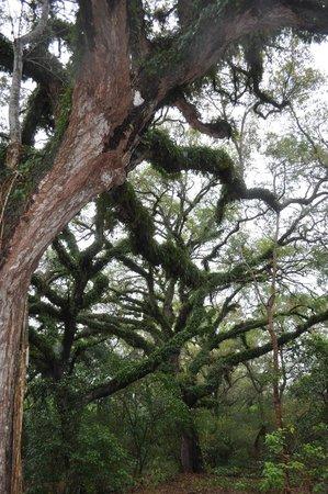 Tree Tops Park- 2013