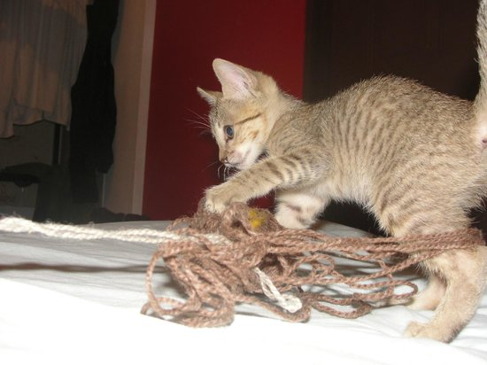 Hospedaje Dodero:                   Baby Cat