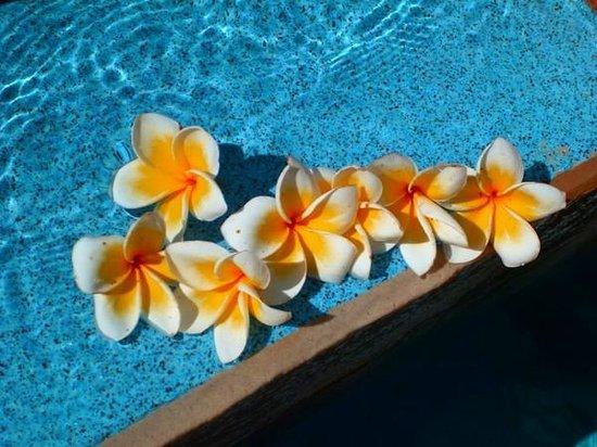 Vatulele Island Resort:                   бассейн