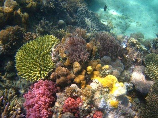 Anantara Medjumbe Island Resort:                   подводный мир острова