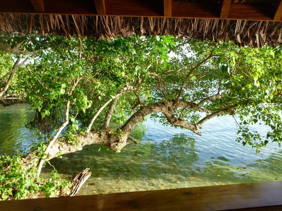Oyster Island Resort:                   View from our bungalow