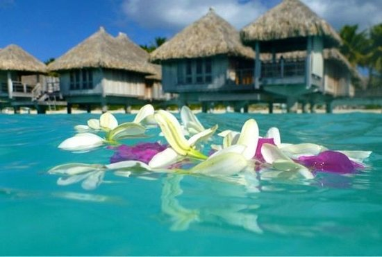 The St. Regis Bora Bora Resort:                   водные бунгало