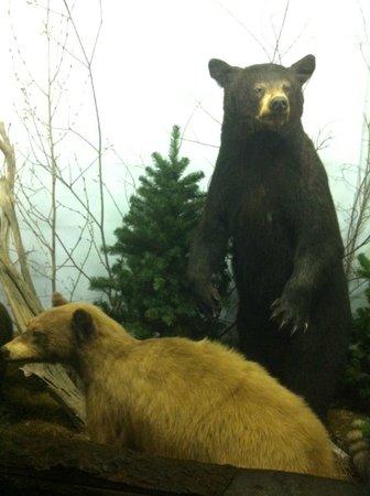 The Den - Jasper's Wildlife Museum :                   Black Bear
