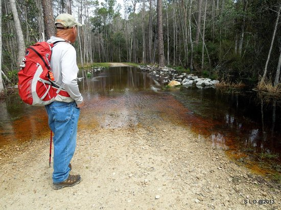 Conservation Park:                   Longleaf trail can only be traversed by wading.