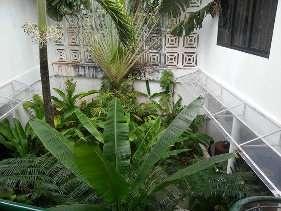 아르고나우타 보라카이 사진