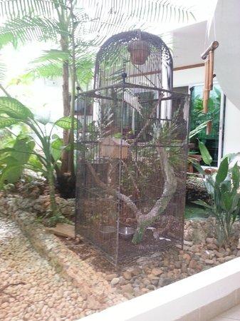 Argonauta Boracay:                                     hotel birds