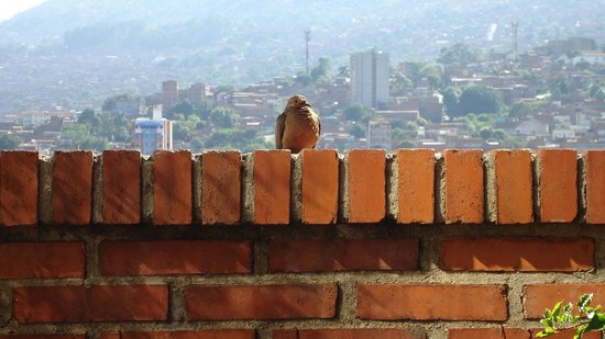 Paisasky:                   a friend on the terrace, Medellin