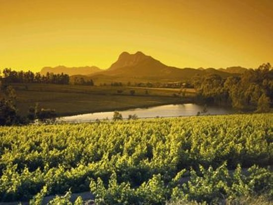 Western Cape, Güney Afrika:                   Views from the vineyards