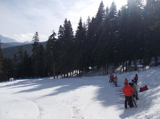 Ilgaz Mountain National Park:                   ılgaz
