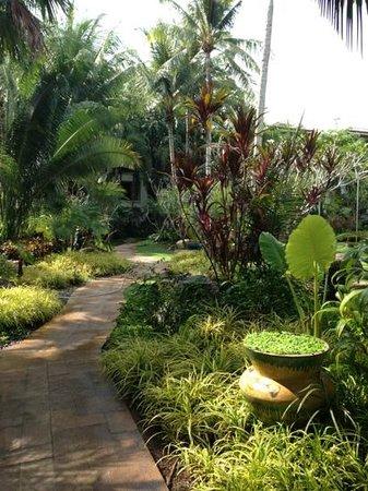 Marriott's Phuket Beach Club:                   отель утопает в зелени