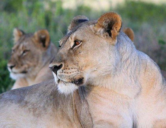Kwandwe Great Fish River Lodge:                   Tierwelt