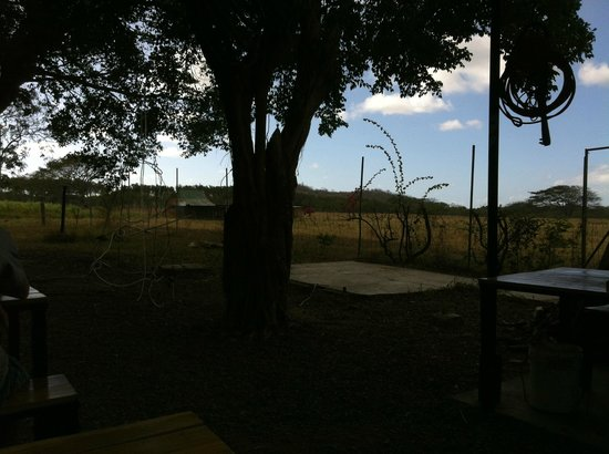 Plaza Copal Restaurant And Tourist Information :                   Campos ao lado do restaurante