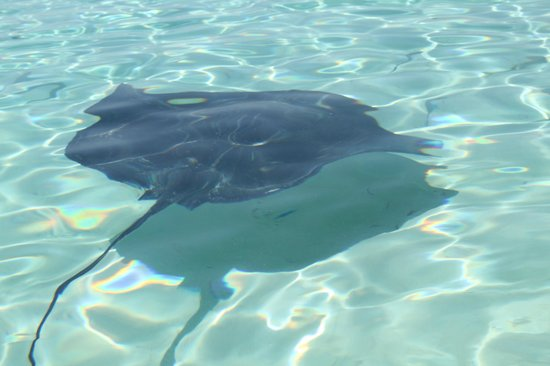 Powerboat Adventures:                   sting ray
