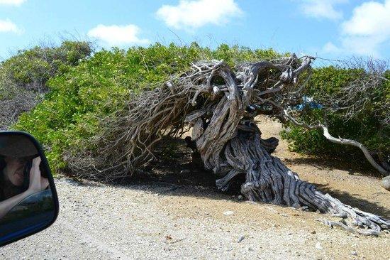 H2O Visions Bonaire:                   A beautiful and strange tree.