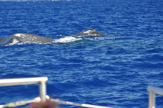 Frogman Whale Watch:                   Whales everywhere!