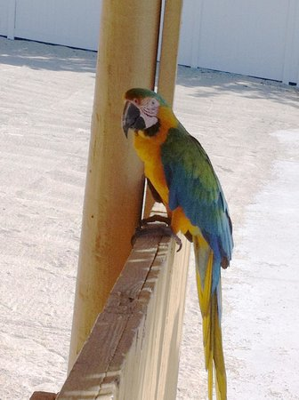 Hampton Inn Key Largo:                                     Mango the Macaw