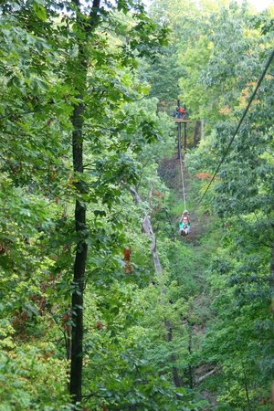 Grafton Zipline Adventures:                   Great Views
