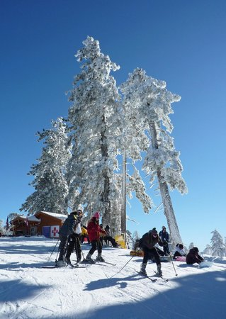 Mountain High Resort:                   Trees ladened with snow!