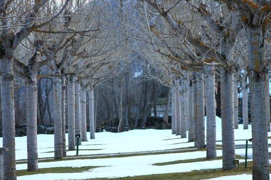Camping La Borda del Publill:                   Invierno - árboles junto al bungalow