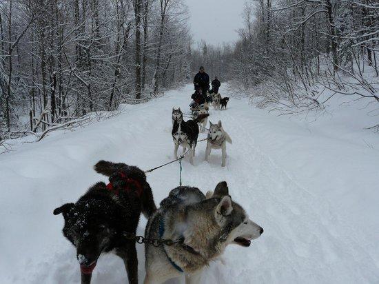 Auberge du Lac-a-l'Eau-Claire: Ballade en traineau à chien