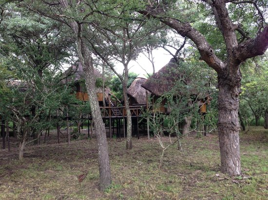 Pezulu Tree House Game Lodge:                   Treehouse complex