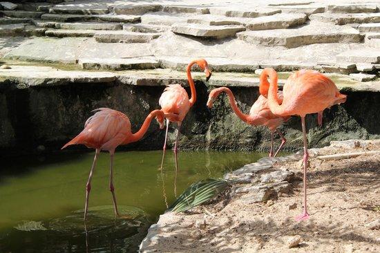 IFA Villas Bavaro Resort & Spa:                   flamingo