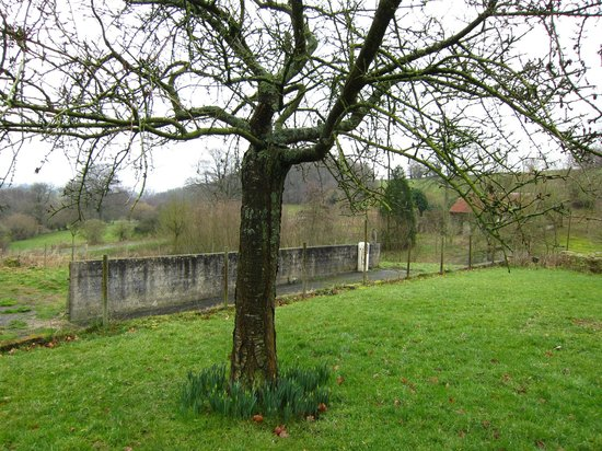 Normandy Inn :                   Almost ready to blossom Cherry tree