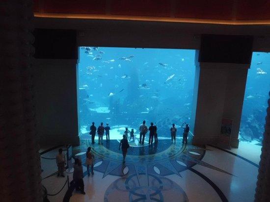 Atlantis, The Palm:                   Parte do imenso aquário que tem no hotel
